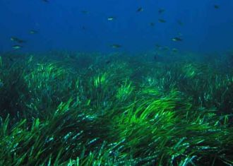 Ocean Acidification Report: West Coast Seagrass Studies