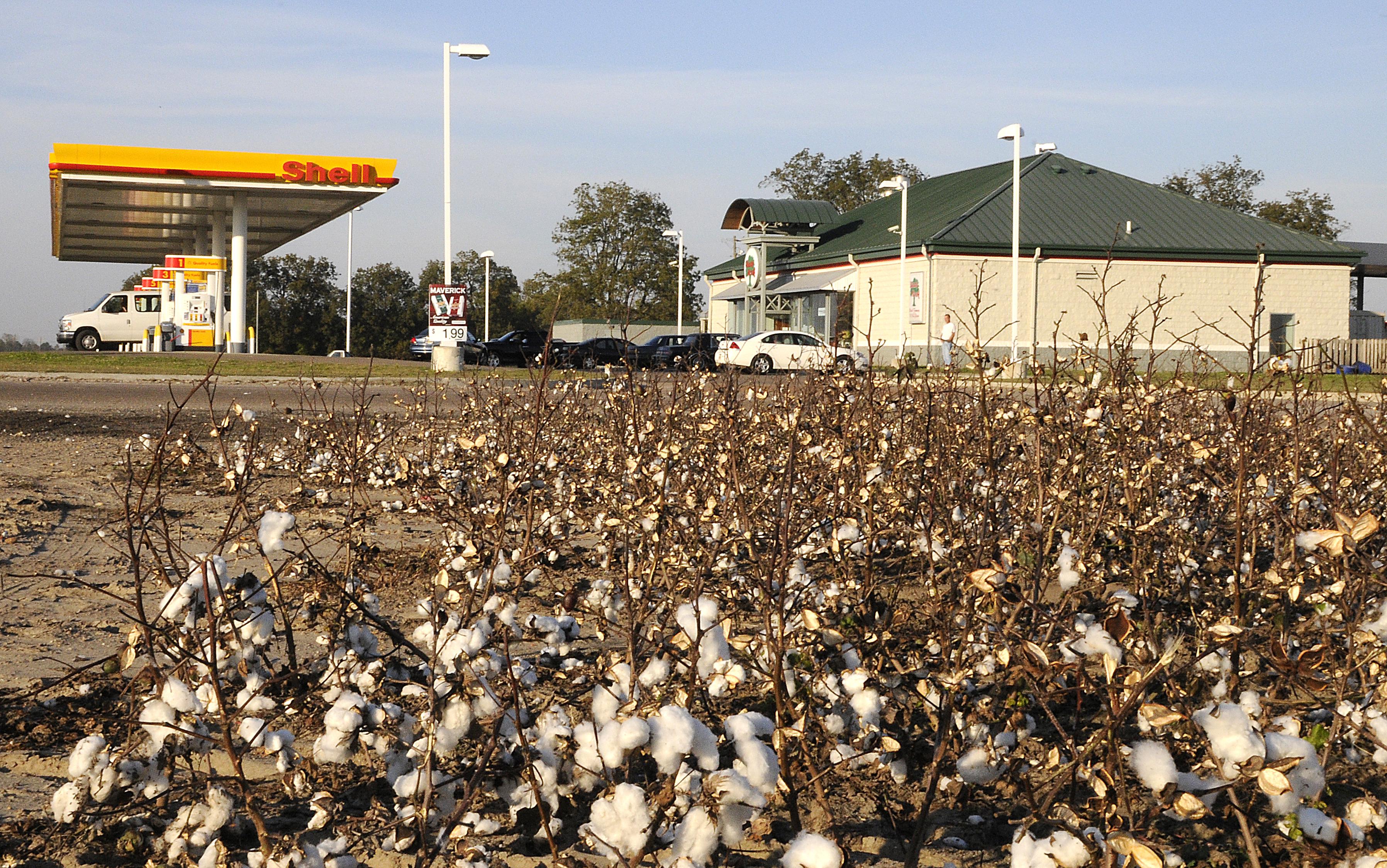 clarksdale-cotton.jpg