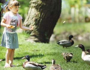 Adalyn Manuel, 4, feeds ducks at Letort Park in Carlisle, Monday morning. Michael Bupp/The Sentinel 2011