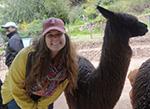 befriending alpacas