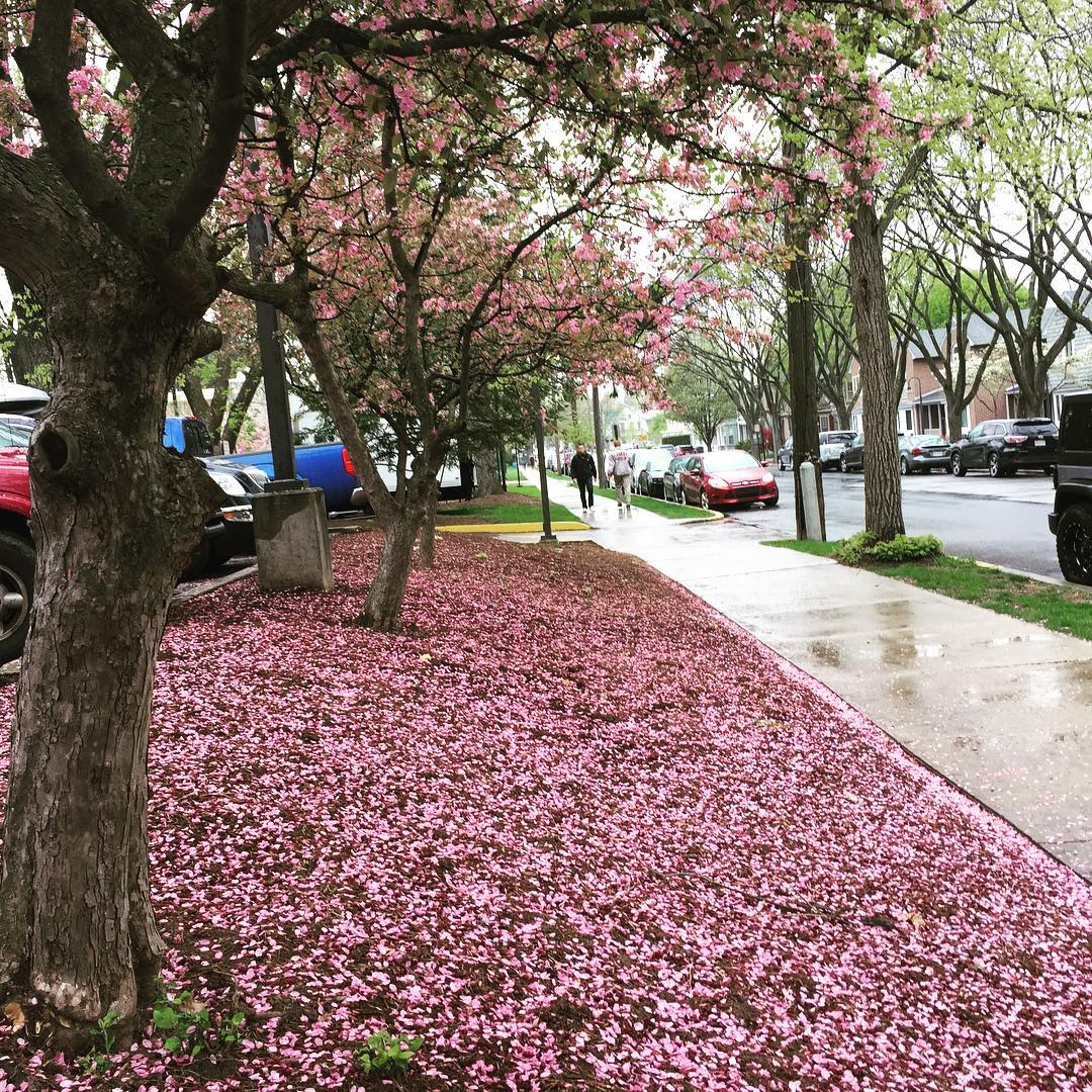 Rain doesnt get in the way of spring blossoms! Summerhellip