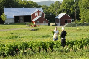 Student farmers harvesting produce at the farm.