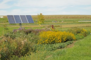 Pollinator Garden by Solar Array (behind Yurts)