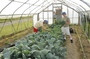 Two student workers harvest greens at the farm.