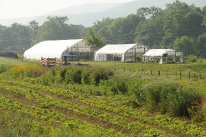 Greenhouses and High Tunnels on Dickinson Farm