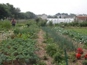 Dickinson Student Garden, 2000
