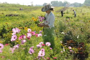 Jenn Halpin gathering flowers at the farm.