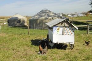 Chickens seeking shade and yurts in the background.
