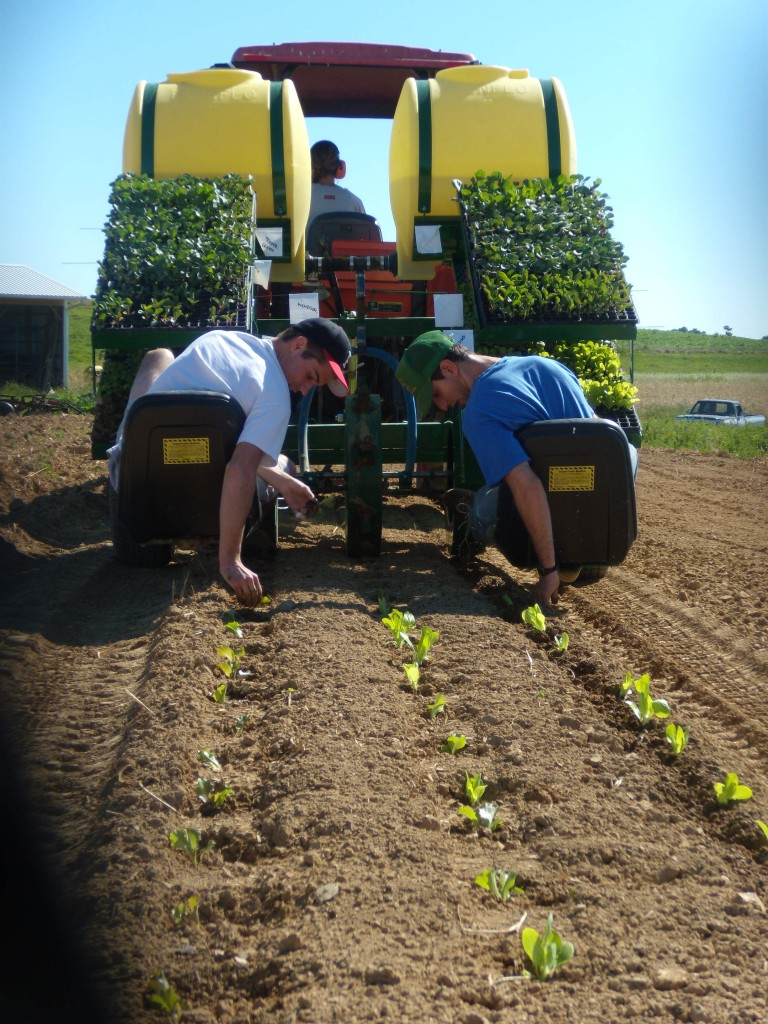 Student workers plant seedlings at Dickinson Farm.