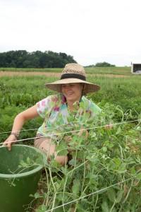 Claire Fox, Dickinson College Farm Graduate Intern, harvesting produce in summer 2011.