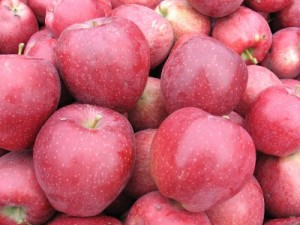 Oyler's Organic Farms - Red Delicious Apples