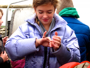 Dickinson College Farm: a child checks out a red wiggler worm.