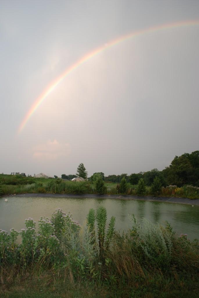 rainbow, farm view, landscape, pond