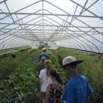 dig greenhouse