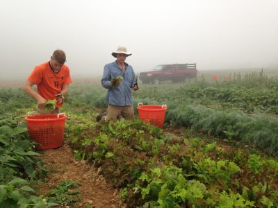 Two farmers in the mist