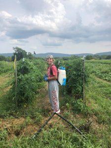 Kelsey dressed in sweatpants spraying tomatoes