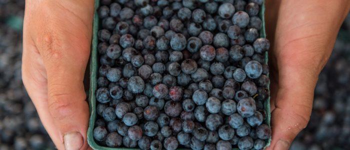 blueberries from Lauren's farm