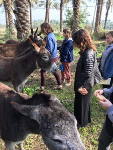 Dates and Donkeys
