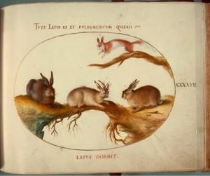 Lepus Cornutus