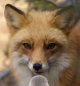Fox-Reporter