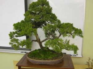 Seismic Japan and Bonsai events 022