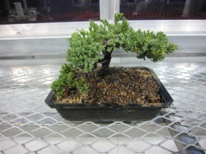Seismic Japan and Bonsai events 121