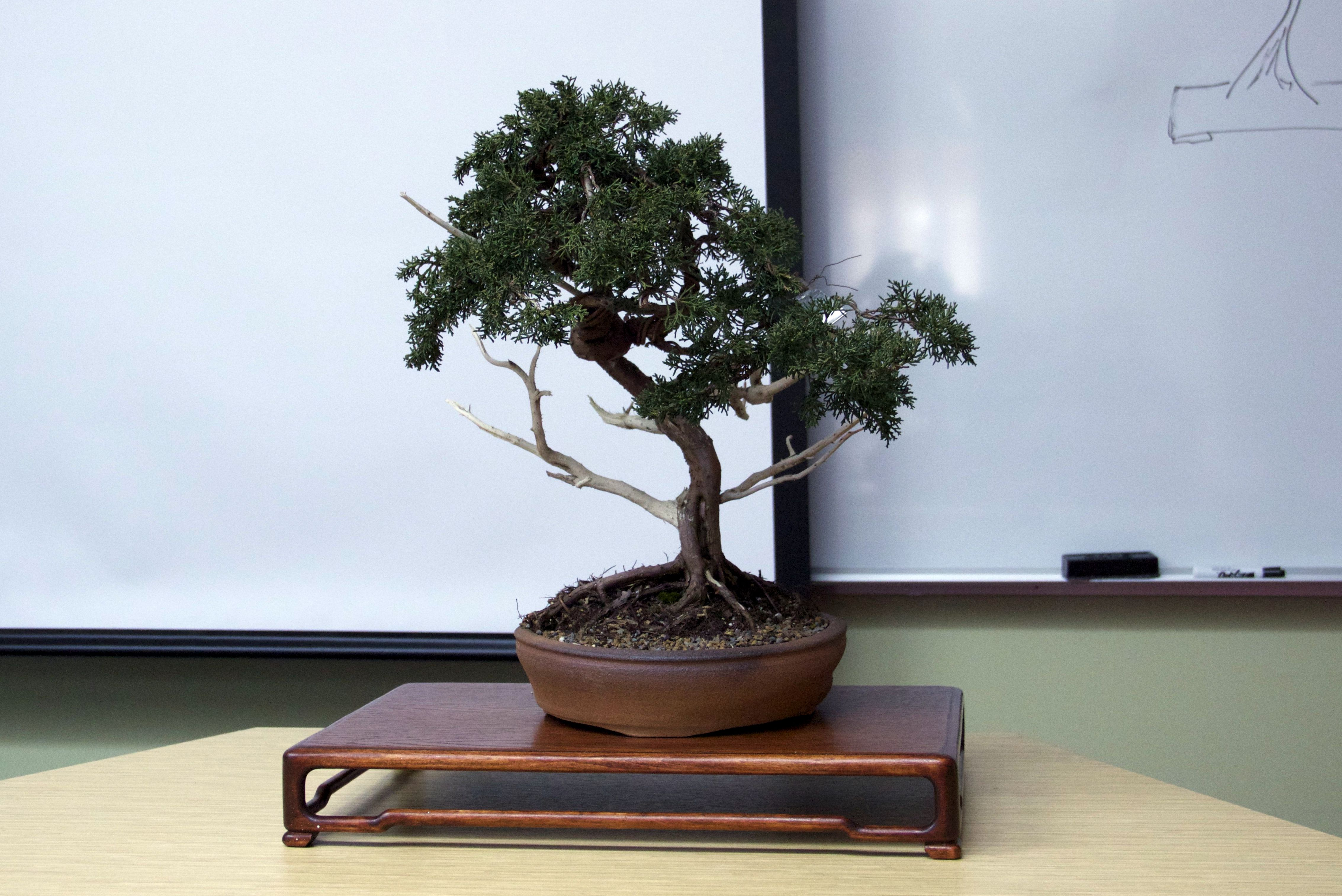 On April 2nd, 2014 Jim Doyle from Nature's Way Nursery in Harrisburg, Pa taught a class on Bonsai for students in the East Asian Studies Department. Doyle provided a brief […]
