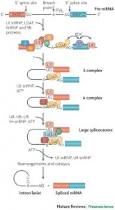 Spliceosome review image