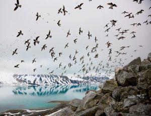 fying birds above ice