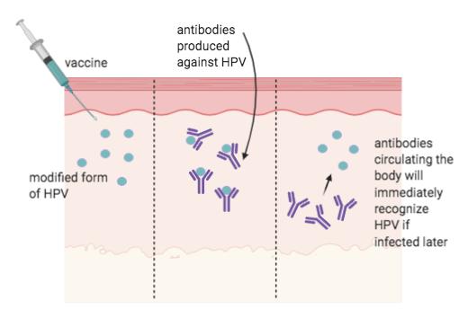 vaccine explanation